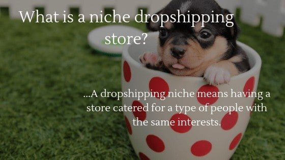 General vs Niche Dropshipping store: What is a Niche Dropshipping store?