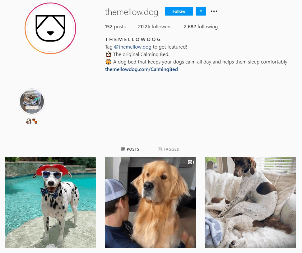 Dropshipping Instagram account example: The Mellow Dog
